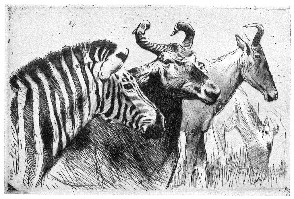 Zebra-and-Friends